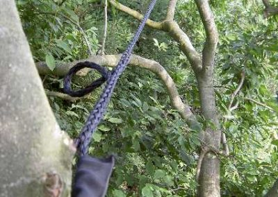 Cobra garanderen van boomveiligheid