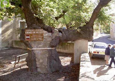 Opvallende bomen