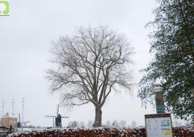 Snoeien diverse bomen