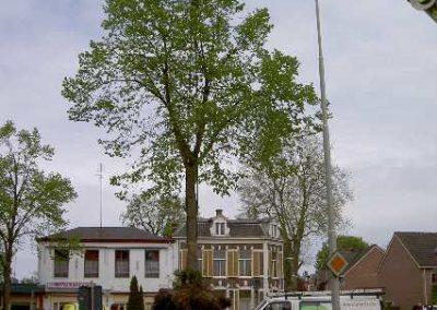 Verplanten van bomen